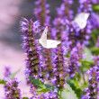Stock Photo: Nature medow purple flowers blur background.