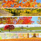 Herfst collage — Stockfoto
