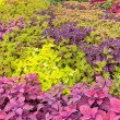 Foto de Stock  : Colorful garden