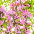 Blossom spring background — Stock Photo