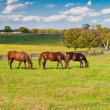 Photo: Horses at horse farm