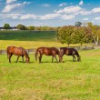 Stockfoto: Horses at horse farm