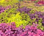 Renkli Bahçe — Stok fotoğraf
