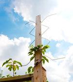 Antenna tv digitale in casa all'aperto. — Foto Stock