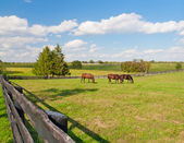 Horses at horse farm — Foto de Stock