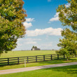 Stock Photo: Green pastures of horse farms