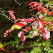 Stock Photo: Tree branch with autumn leaves.
