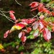 Tree branch with autumn leaves. — Stock Photo