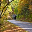 Road and a tunnel in autumn forest. — Stock Photo #35146763