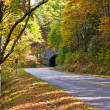 Road and a tunnel in autumn forest. — Stock Photo