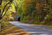 Road and a tunnel in autumn forest. — Stockfoto