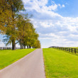 Stockfoto: Green pastures of horse farms