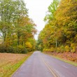 Road in autumn forest. — Stock Photo