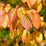 Natural autumn background. — Stock Photo