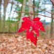Last leaf of Autumn — Stock Photo