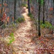 Path in autumn forest — Stock fotografie
