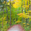 autumn forest — Stock Photo #35573633