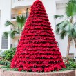 Red poinsettias flowers in Christmas tree shape. — Stock Photo