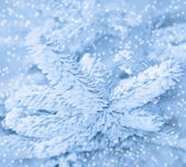 Winter frost on spruce tree close-up, monochrome, toned. — Stock Photo