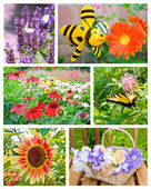 Garden flowers collage. — Stock Photo
