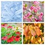 Four seasons collage — Stock Photo #39057471