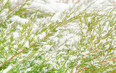 Snow winter day natural background — Stock Photo