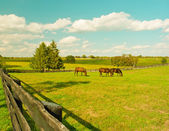 Horses at horse farm  — Stock Photo
