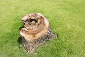 Stump and the grass in the park, stump in the park — Stock Photo