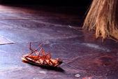 Dead cockroaches — Zdjęcie stockowe