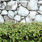 Beautiful decorative plant on the stone wall — Stock fotografie