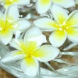 Tropical flowers frangipani floating in water — Stock Photo