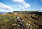 Flowers on hill and mountains near clifden - Ireland — Stock Photo