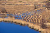 Field of Reeds cut and circular Traces with blue water — Stock Photo