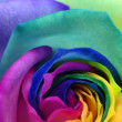 Close up of rainbow rose heart — Stock Photo