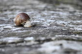 Close up of a snail — Stock Photo