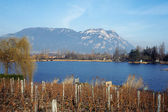 Vineyards in Savoy and lake, France — Stock Photo