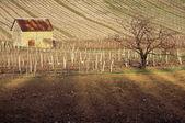 Winnice w sabaudii, francja — Zdjęcie stockowe