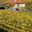 Vineyards in autumn and red roof house in Savoy, France — Stock Photo