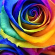 Rainbow rose or happy flower — Stock Photo