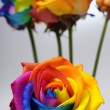 Bouquet of Rainbow rose — Stock Photo