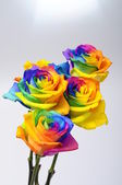 Bouquet of Rainbow rose — Stock Photo