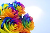 Rainbow rose or happy flower — Stock Photo