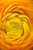 Macro of yellow flower for background — Stock Photo