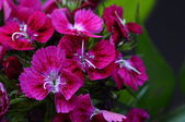 Pink flowers and green foliage — Stock Photo
