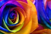 Rainbow rose or happy flower — Stok fotoğraf