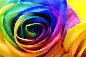 レインボー ローズまたは幸せの花 — ストック写真