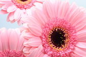 Close up of pink flower — Stock Photo