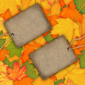 Autumn background with card label — Stock Photo