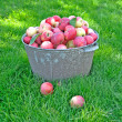 Fresh apple crop harvested in the garden — Stock Photo