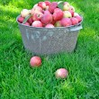Fresh apple crop harvested in the garden — Stock Photo #12679828